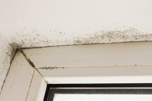 mold damage remediation water smoke mold