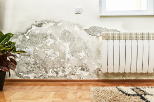 mold removal by water smoke mold